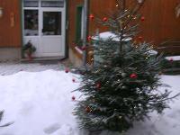 Urlaub mitHund im Harz- Ferienhaus am Wald